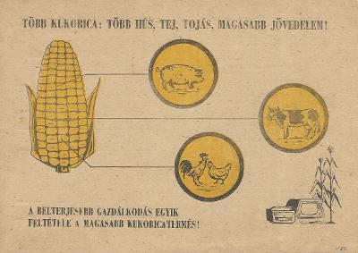 A magasabb kukoricatermésért! A belterjesebb gazdálkodás egyik feltétele a magasabb kukoricatermés!
