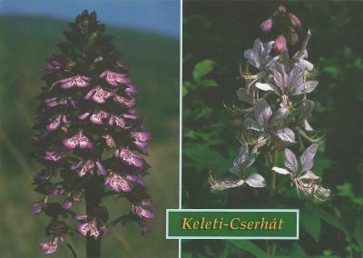Keleti-Cserhát