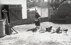 Magyar Nemzeti Digitális Archívum • Tyúkok etetése lábasból